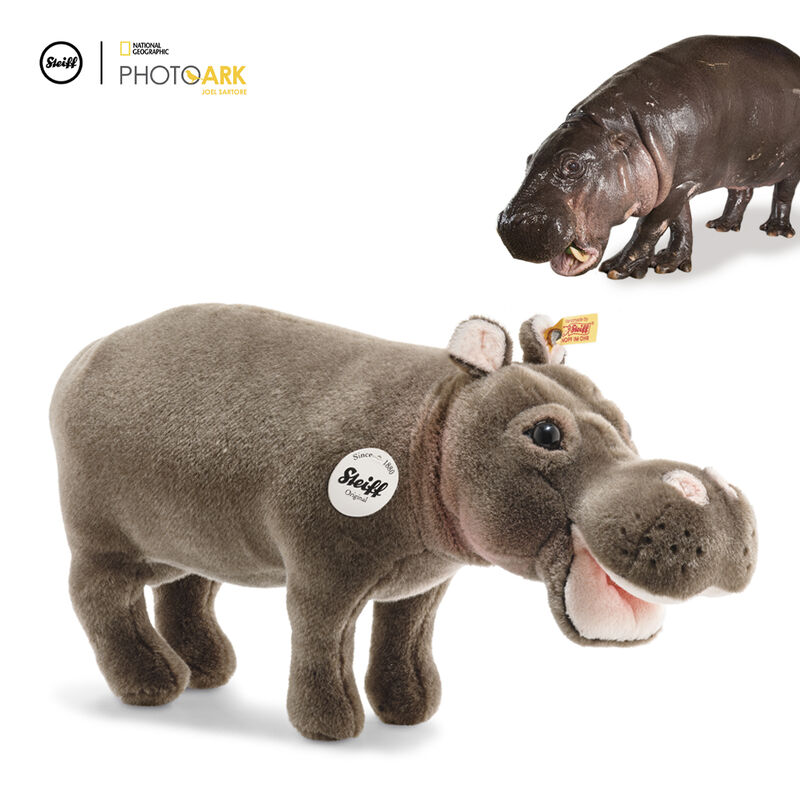 national geographic hippo hedda UK SNGH a main