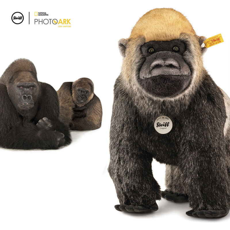 national geographic gorilla boogie UK SNGG a main