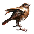 ruffled feathers bronze robin UK RFBR a main