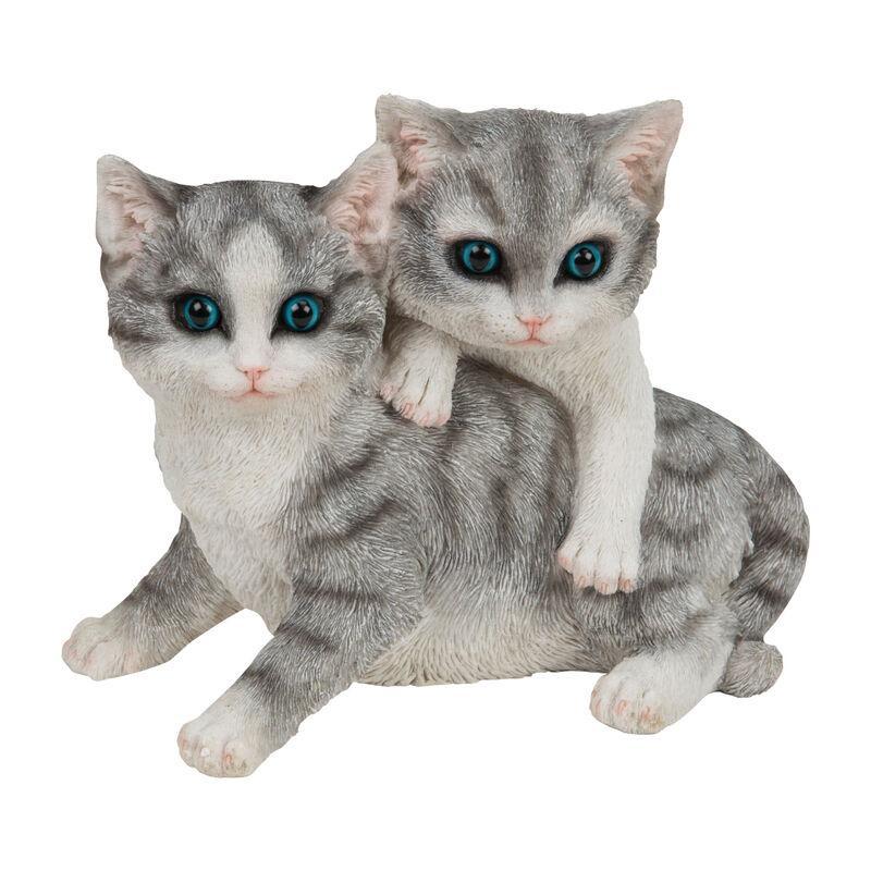 bff kittens UK BFFK a main